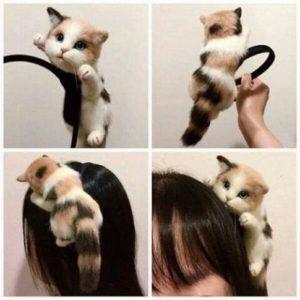 Bendita cu pisica pe ea
